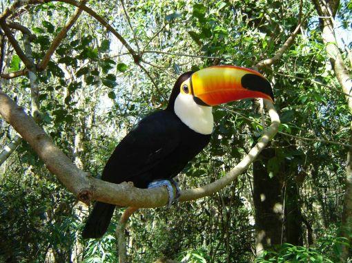 Fauna Amazonia